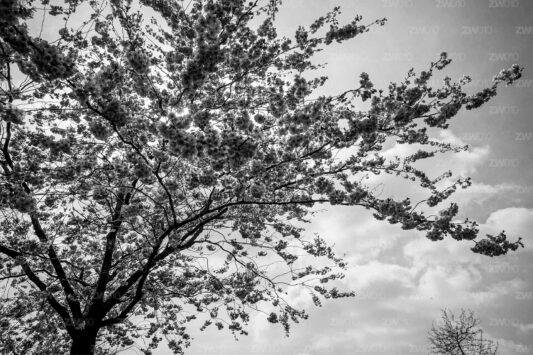 Rotterdam zwart wit foto van ©ZwartWit010. Urban Nature